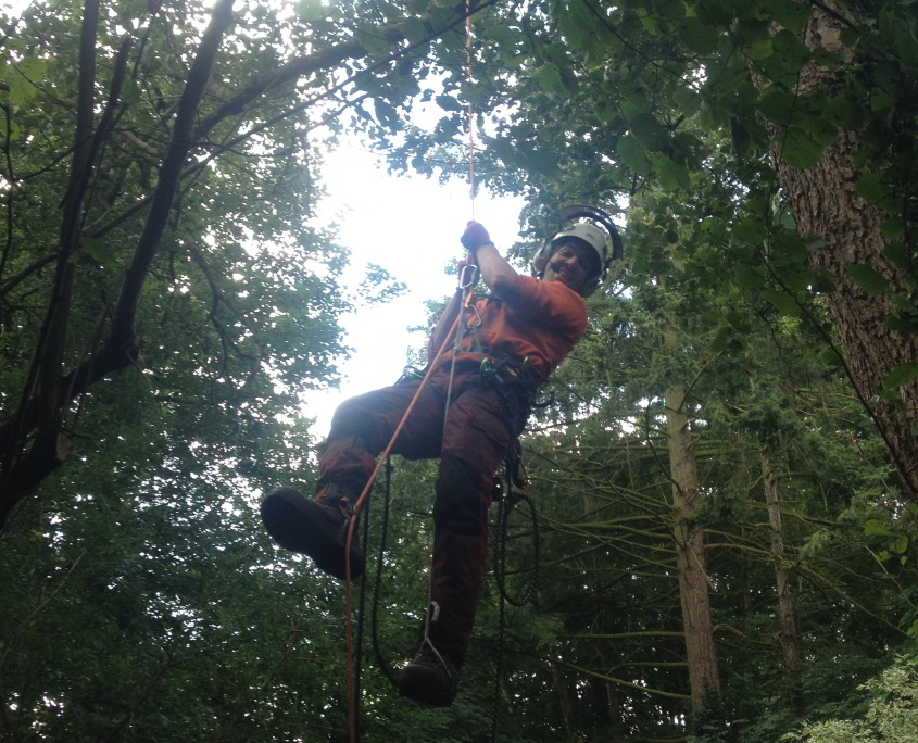 Tree Surgeon hanging from Tree