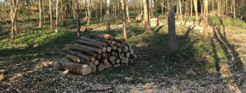 Woodland Management Slider