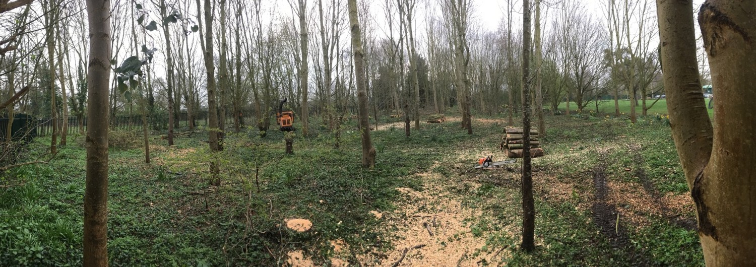 Tree Surgery in Gloucestershire