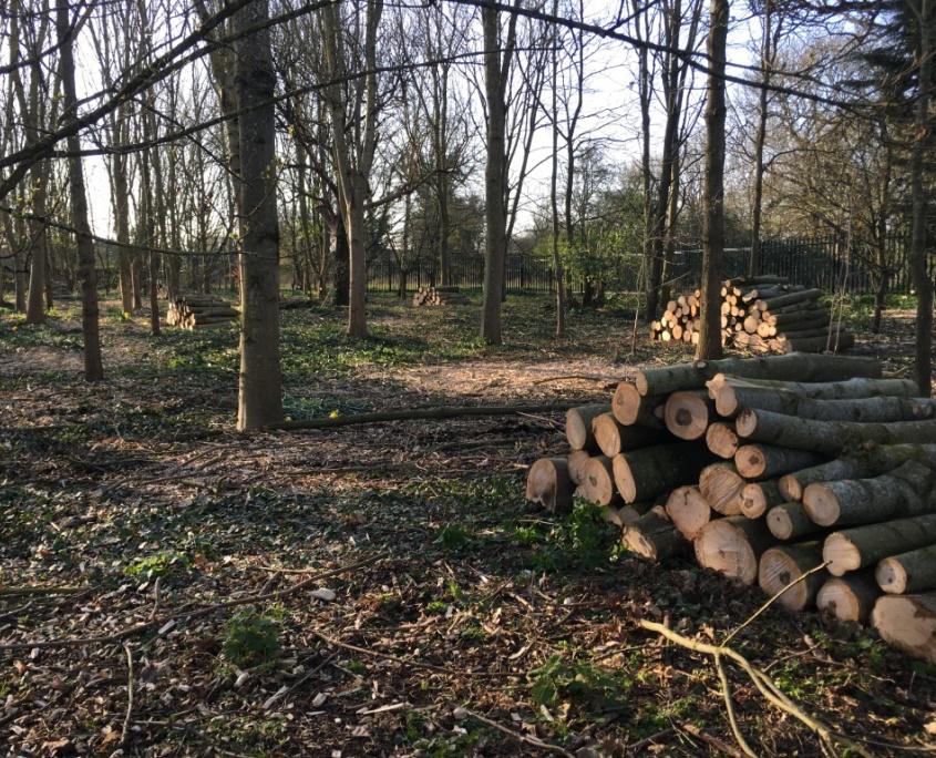 Multiple Stacks of Logs